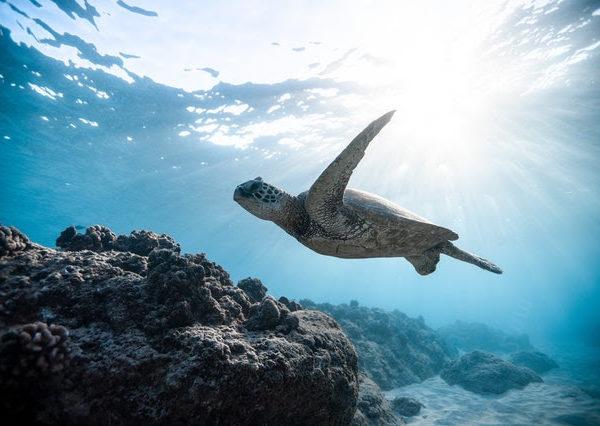 World Turtle Day . . .